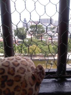 松本城にのぼったひょう