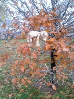 枝に引っ掛かるひょう