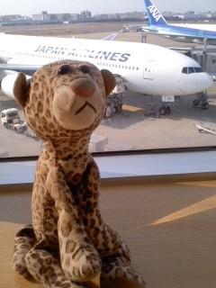 空港に来たひょう