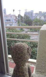 宮古島の街を見るひょう