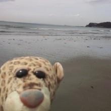 海に来たひょう